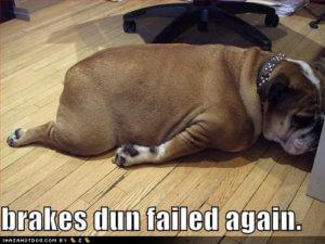 brakes-fail-bulldog